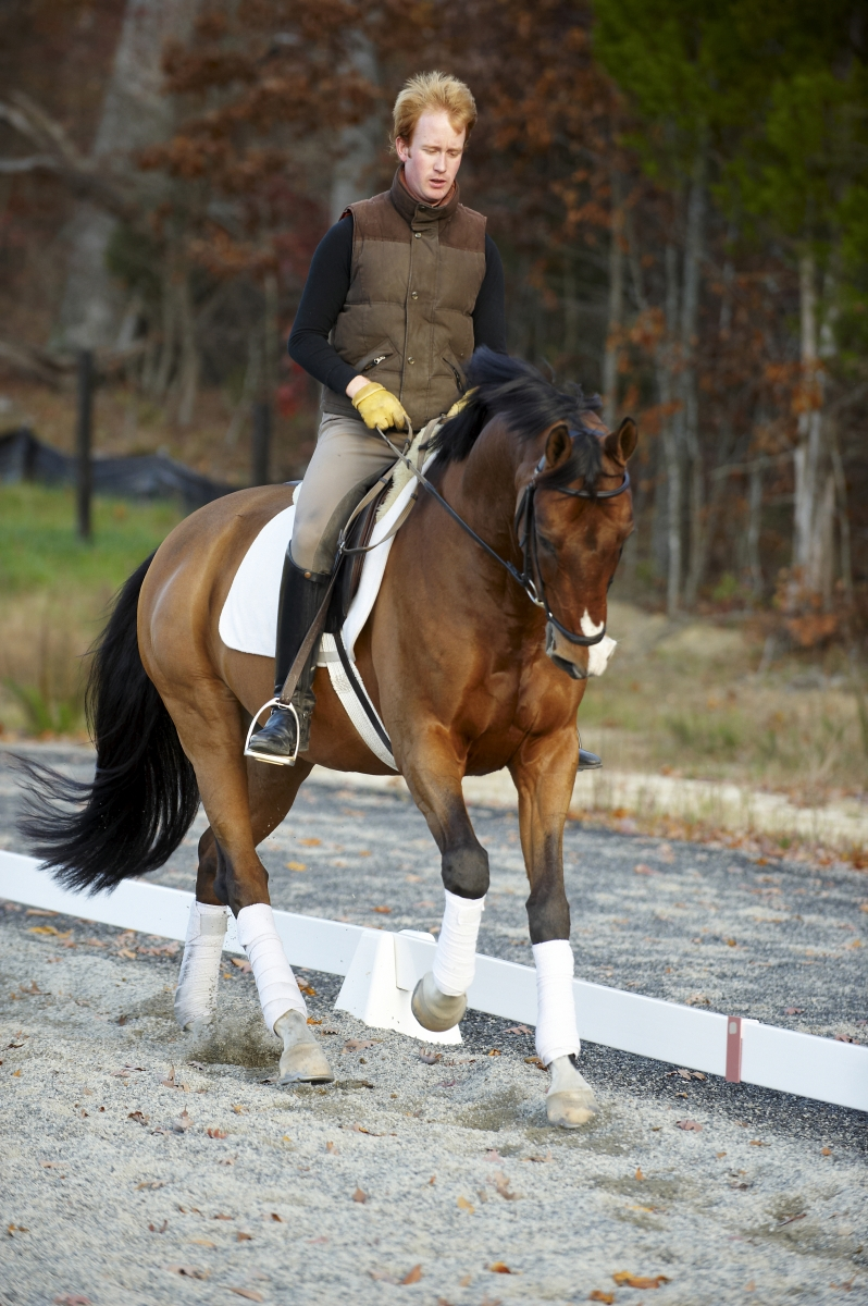 dressage horse with impulsion