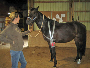 Equine First Aid Bandaging A Horse Horse Journals