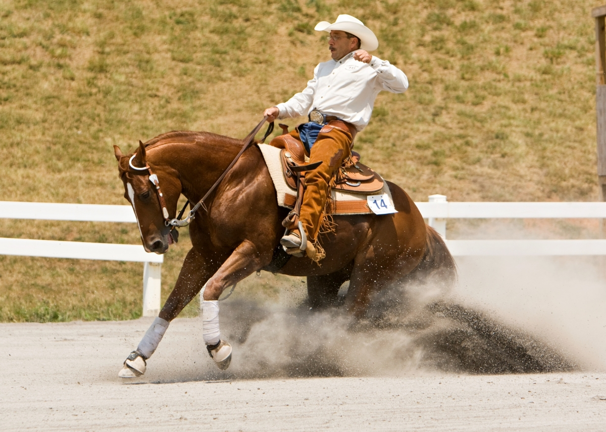 The World's Favourite Horse: The American Quarter Horse ...