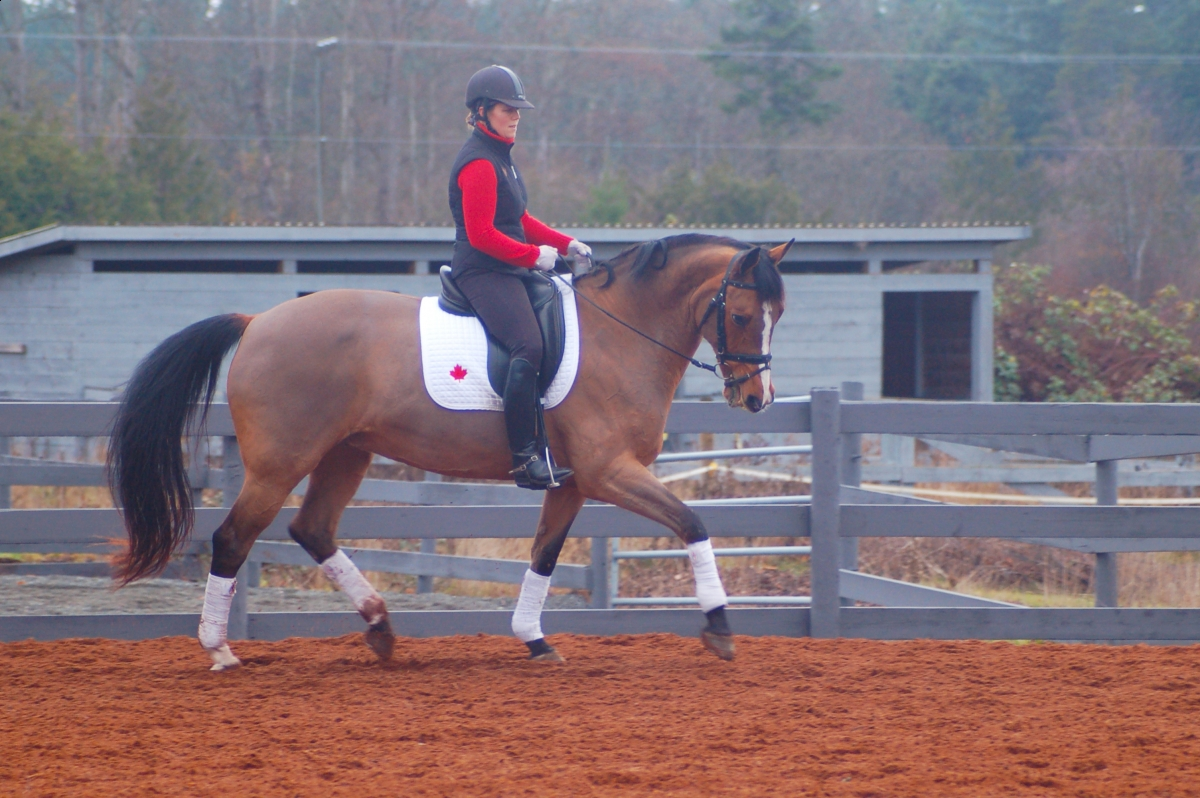 Warm-Up Horse Health Rider Health Fitness Workout