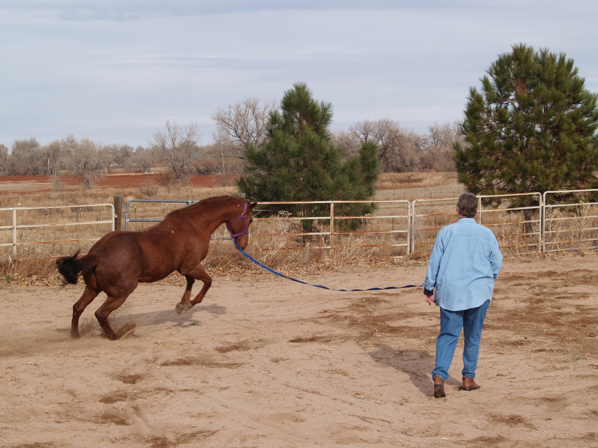 how to teach a horse to lunge on a line