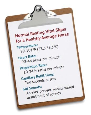 check your vitals