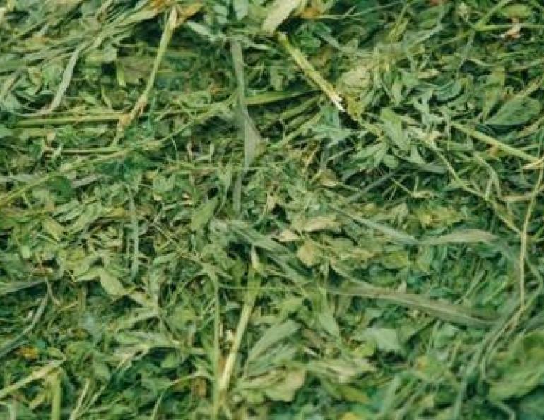 alfalfa hay   friend or foe horse journals